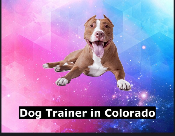 Dog Trainer in Colorado