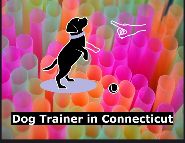 Dog Trainer in Connecticut