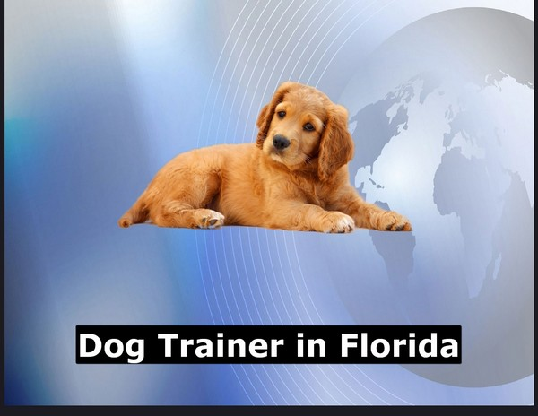 Dog Trainer in Florida