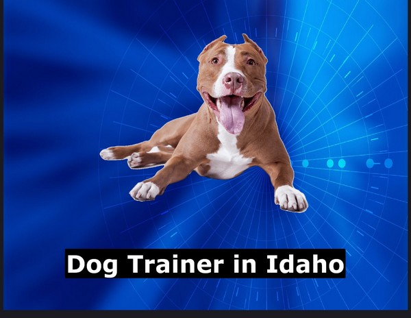 Dog Trainer in Idaho