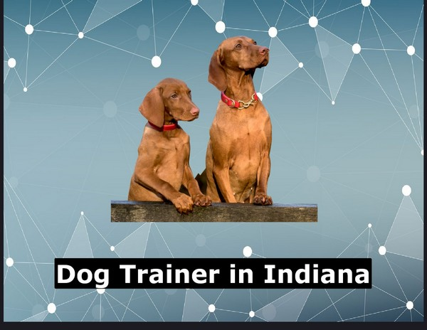 Dog Trainer in Indiana
