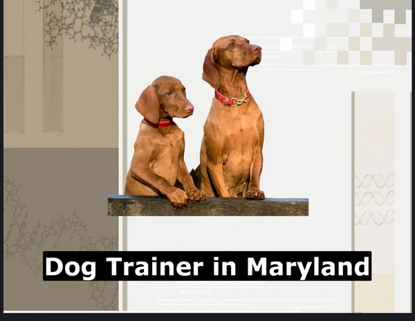 Dog Trainer in Maryland