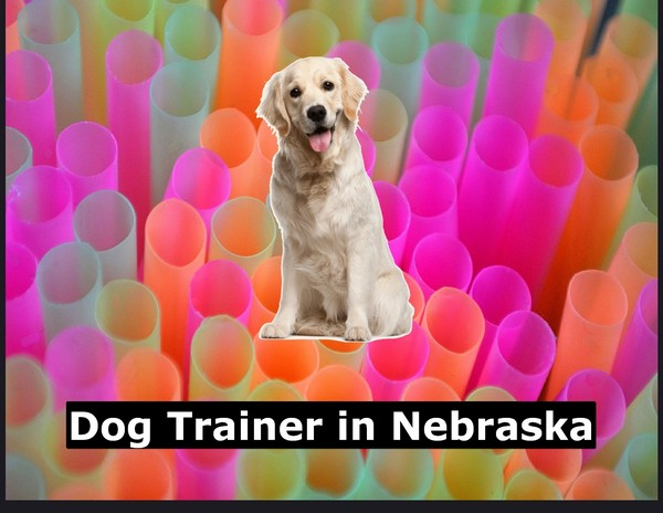 Dog Trainer in Nebraska