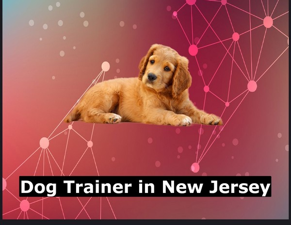 Dog Trainer in New Jersey