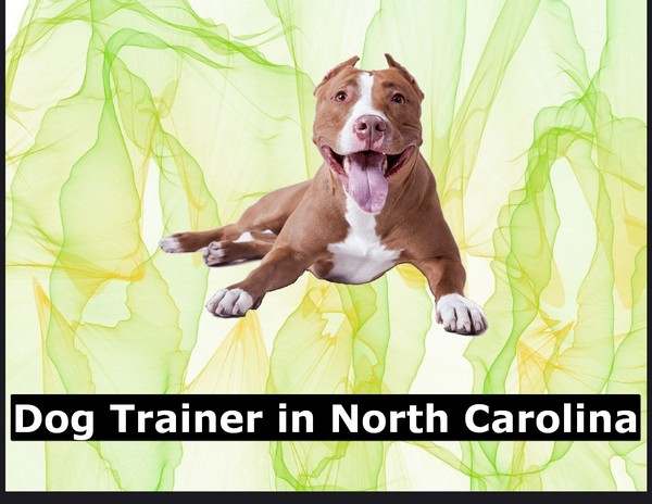 Dog Trainer in North Carolina
