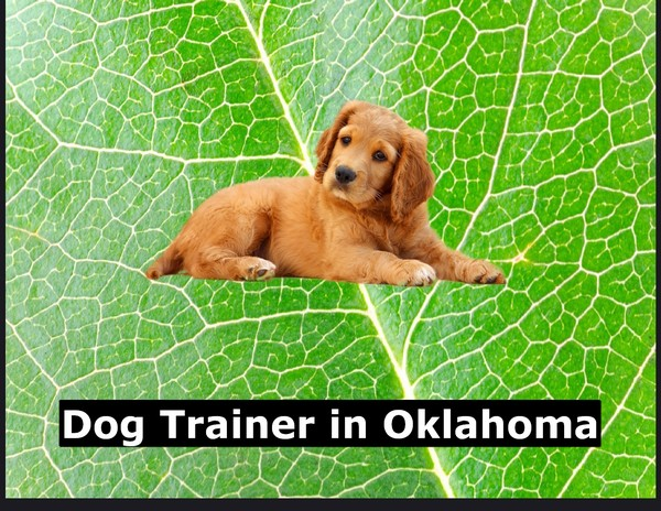 Dog Trainer in Oklahoma