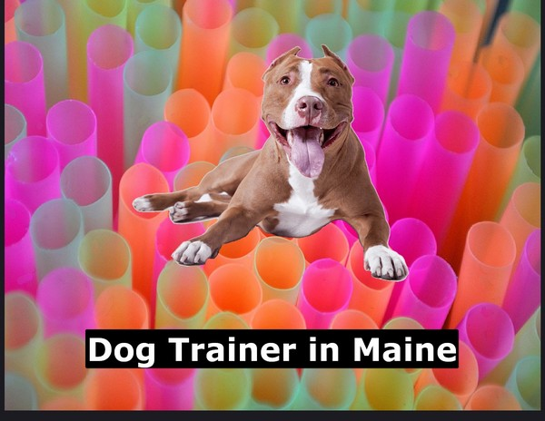 Dog Trainer in Maine