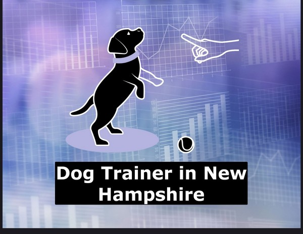 Looking for Dog Training near me Hampshire USA | Dog Trainer